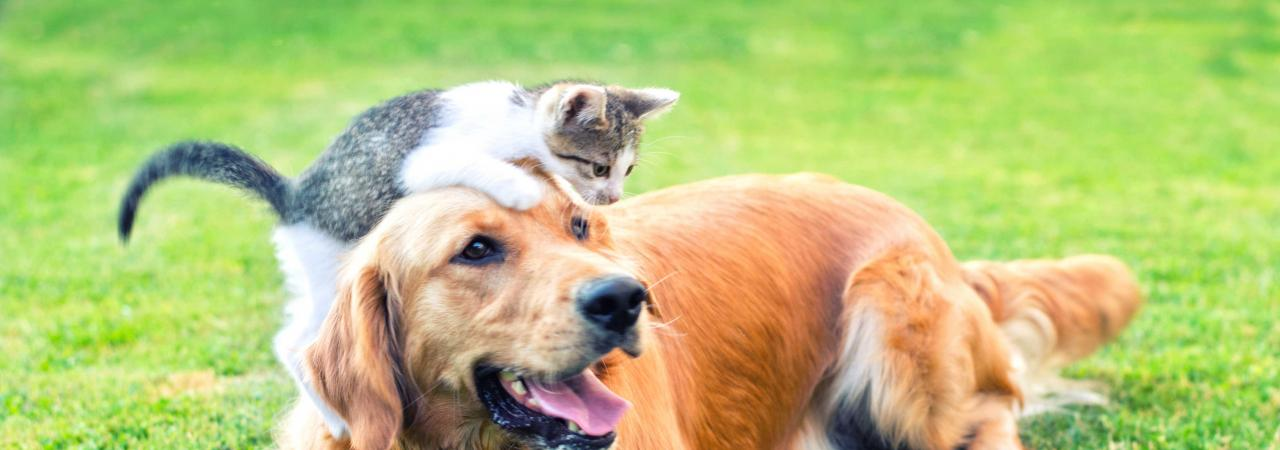 Hills Veterinary Clinic cat and dog